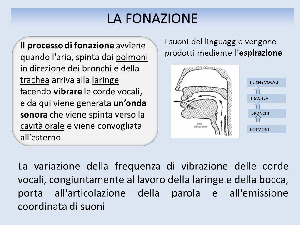 LA FONAZIONE PLICHE VOCALI BRONCHI TRACHEA POLMONI La variazione della frequenza di vibrazione delle corde vocali, congiuntamente al lavoro della lari