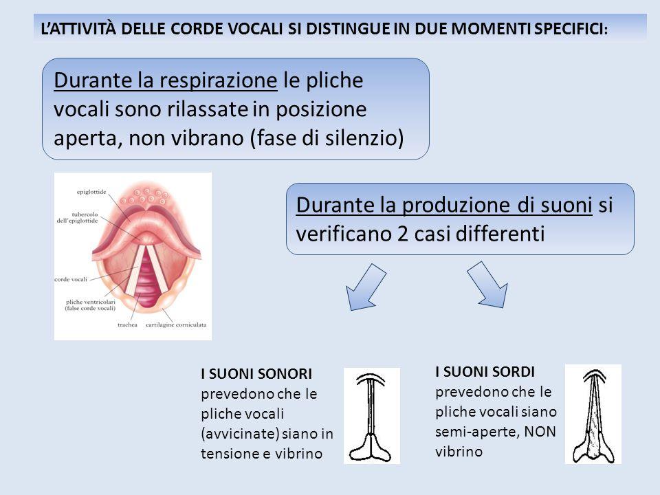 I SUONI SONORI prevedono che le pliche vocali (avvicinate) siano in tensione e vibrino I SUONI SORDI prevedono che le pliche vocali siano semi-aperte,