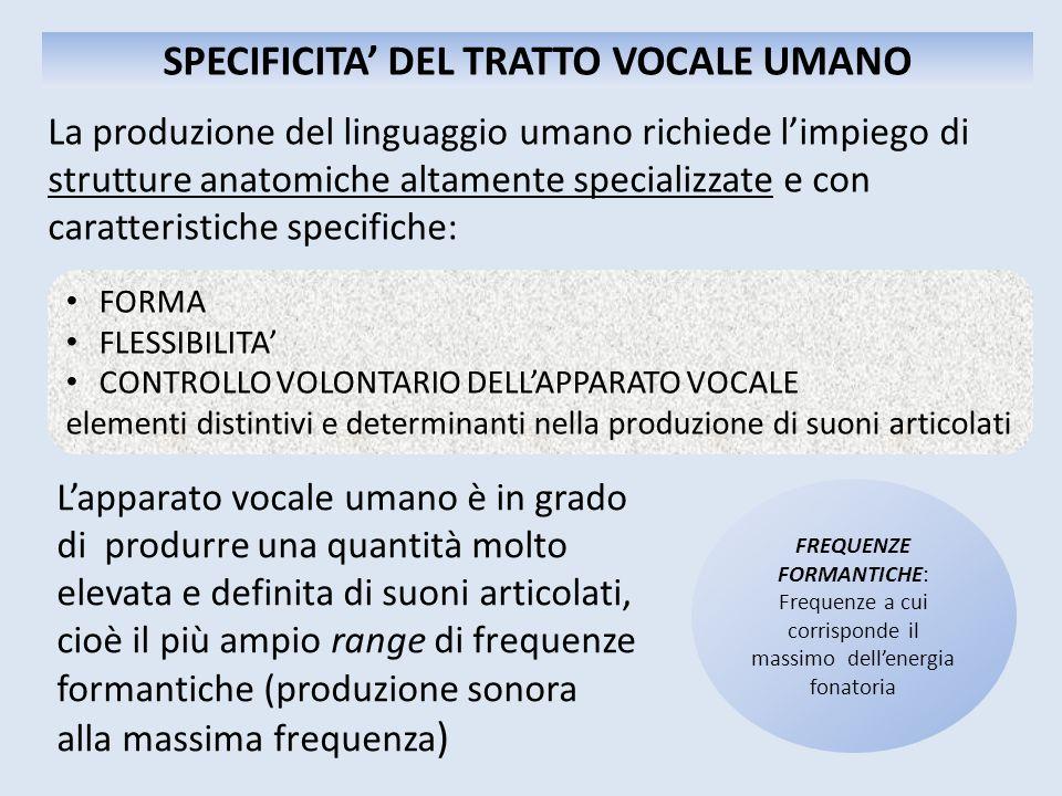 SPECIFICITA' DEL TRATTO VOCALE UMANO La produzione del linguaggio umano richiede l'impiego di strutture anatomiche altamente specializzate e con carat