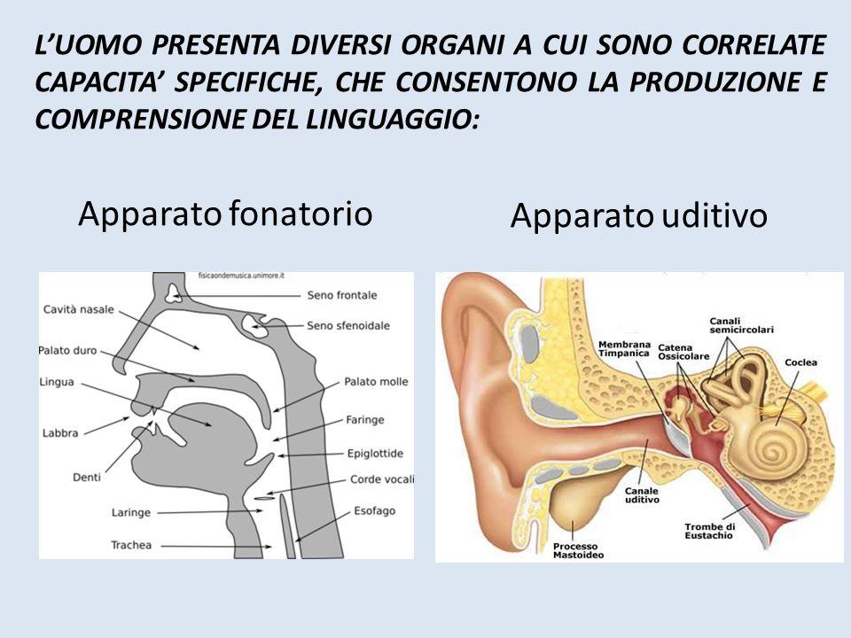 La vista guida i processi di acquisizione linguistica e consente anche a chi non può udire i suoni di percepirli, imitarli e riprodurli L'uomo è una macchina perfetta programmata per acquisire il linguaggio, e grazie ad esso differenziarsi da tutte le altre specie