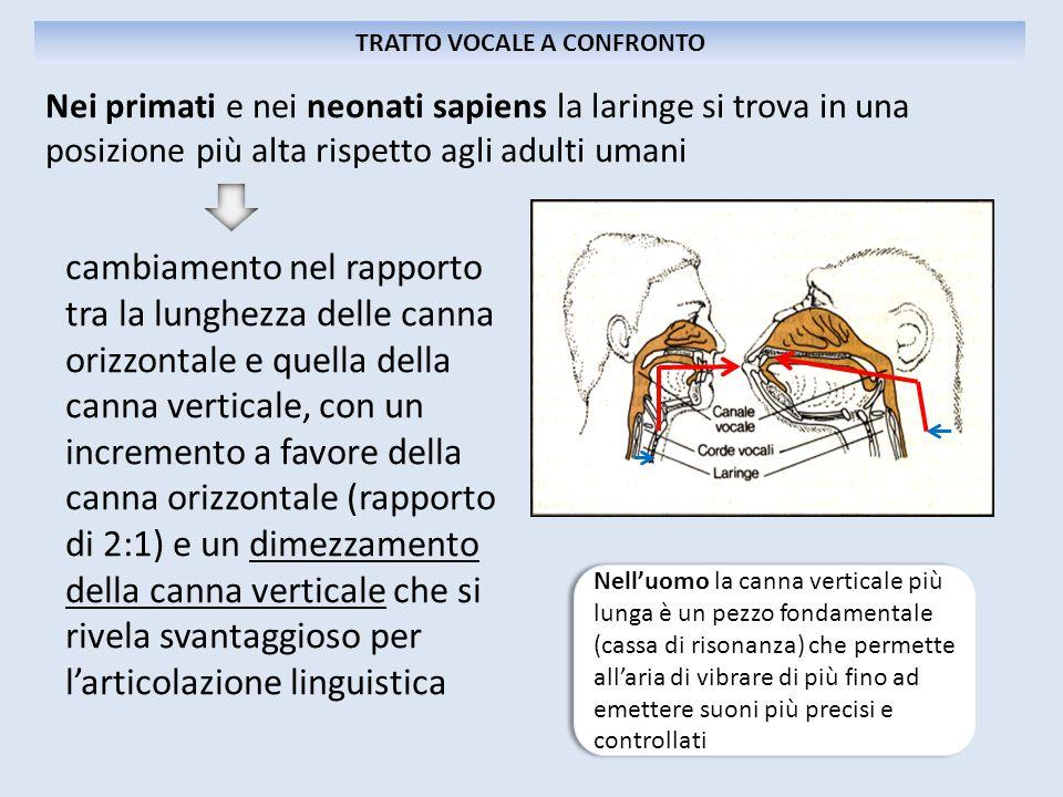 cambiamento nel rapporto tra la lunghezza delle canna orizzontale e quella della canna verticale, con un incremento a favore della canna orizzontale (