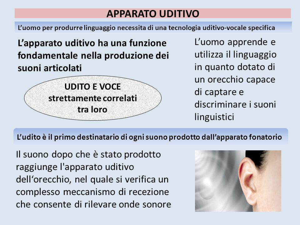 APPARATO UDITIVO L'apparato uditivo ha una funzione fondamentale nella produzione dei suoni articolati L'uomo apprende e utilizza il linguaggio in qua