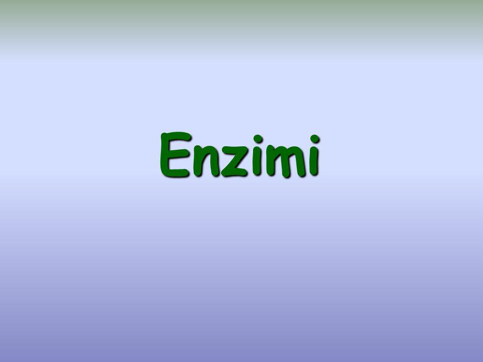 Energia Coordinate di reazione E + S ES EP E + P Stato di transizione ΔG° Stato di transizione Stato di transizione E att (enzimatica) E att (non enzimatica) Profilo energetico di una reazione catalizzata da un enzima