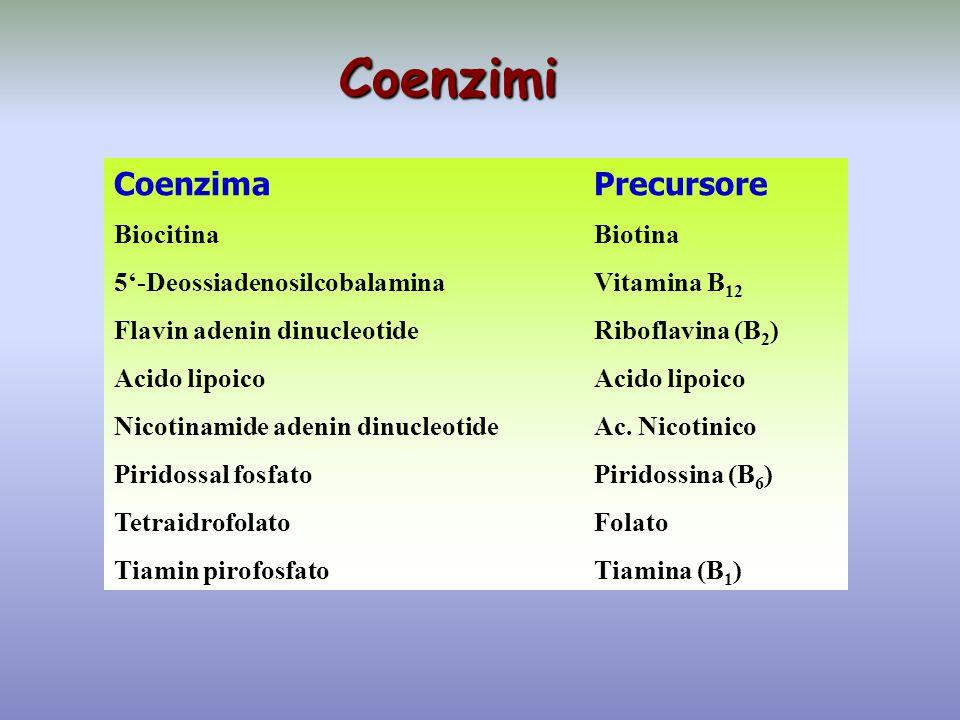 Coenzimi CoenzimaPrecursore BiocitinaBiotina 5'-DeossiadenosilcobalaminaVitamina B 12 Flavin adenin dinucleotideRiboflavina (B 2 )Acido lipoico Nicoti