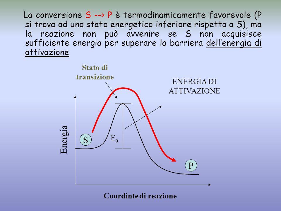 Stato di transizione S P Energia Coordinte di reazione ENERGIA DI ATTIVAZIONE EaEa La conversione S --> P è termodinamicamente favorevole (P si trova ad uno stato energetico inferiore rispetto a S), ma la reazione non può avvenire se S non acquisisce sufficiente energia per superare la barriera dell'energia di attivazione