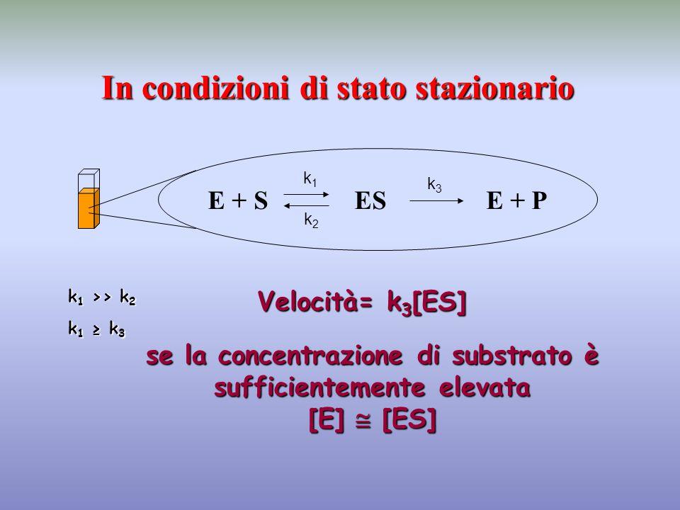 E + S ES E + P In condizioni di stato stazionario Velocità= k 3 [ES] k1k1 k2k2 k3k3 k 1 >> k 2 k 1 ≥ k 3 se la concentrazione di substrato è sufficien