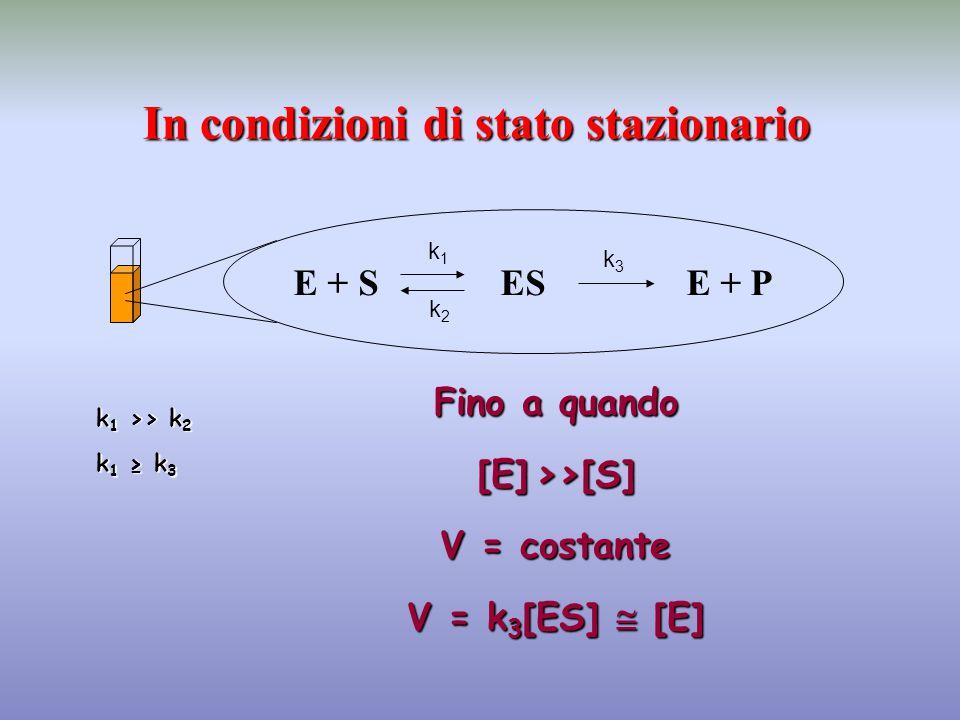 E + S ES E + P In condizioni di stato stazionario k1k1 k2k2 k3k3 k 1 >> k 2 k 1 ≥ k 3 Fino a quando [E]>>[S] [E] >>[S] V = costante V = k 3 [ES]  [E]