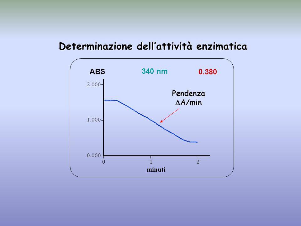 0.380 minuti ABS 340 nm 0.000 1.000 2.000 1 2 0                                                                                  Determinazione dell'attività enzimatica Pendenza  A/min