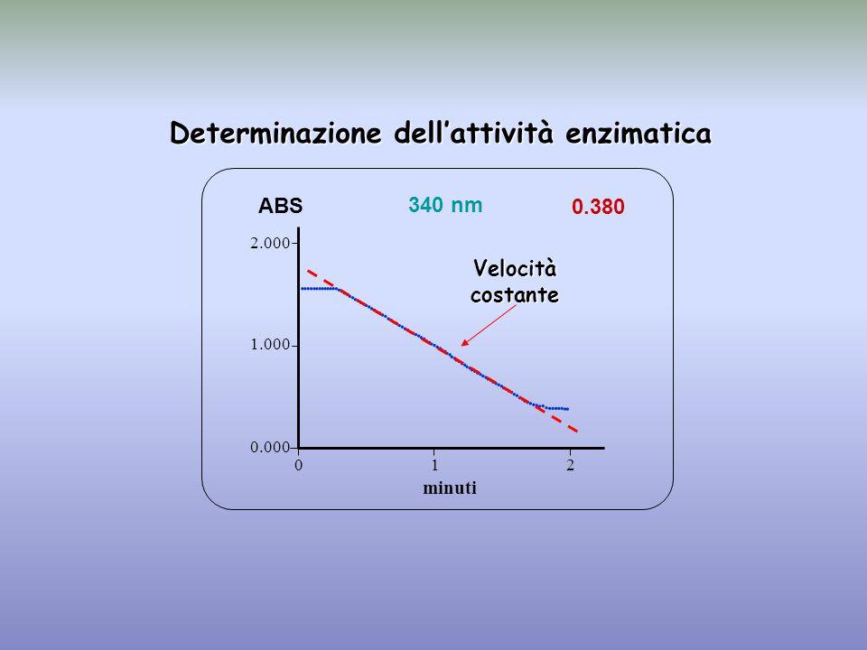 0.380 minuti ABS 340 nm 0.000 1.000 2.000 1 2 0                                                                                  Determinazione dell'attività enzimatica Velocità costante
