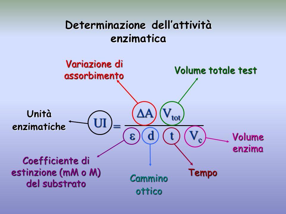Determinazione dell'attività enzimatica UI  A V tot  d t V c = Variazione di assorbimento Volume totale test Coefficiente di estinzione (mM o M) del substrato Camminoottico Tempo Volume enzima Unitàenzimatiche
