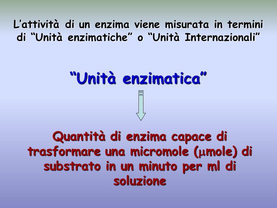L'attività di un enzima viene misurata in termini di Unità enzimatiche o Unità Internazionali Unità enzimatica Quantità di enzima capace di trasformare una micromole (  mole) di substrato in un minuto per ml di soluzione