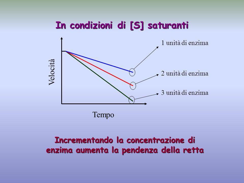 1 unità di enzima 2 unità di enzima 3 unità di enzima Tempo Velocità Incrementando la concentrazione di enzima aumenta la pendenza della retta In condizioni di [S] saturanti