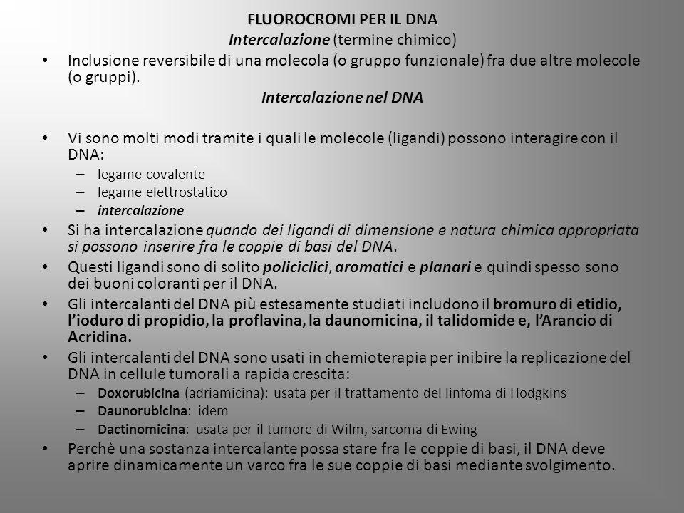 FLUOROCROMI PER IL DNA Intercalazione (termine chimico) Inclusione reversibile di una molecola (o gruppo funzionale) fra due altre molecole (o gruppi).