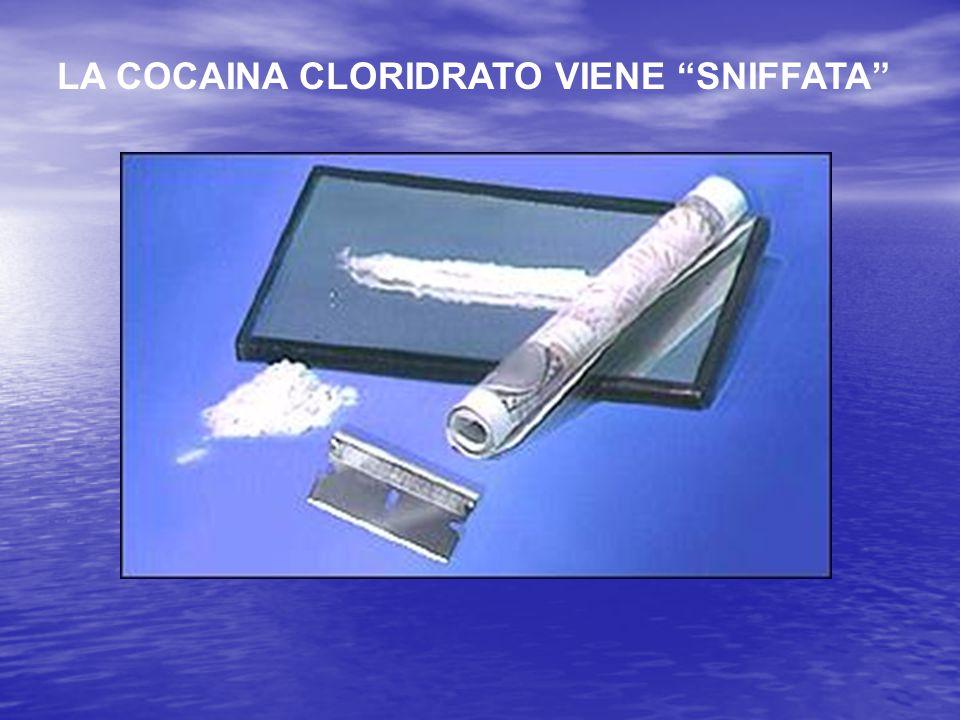 """LA COCAINA CLORIDRATO VIENE """"SNIFFATA"""""""