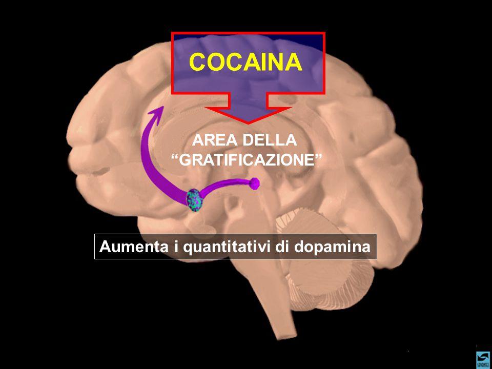 """AREA DELLA """"GRATIFICAZIONE"""" COCAINA Aumenta i quantitativi di dopamina"""