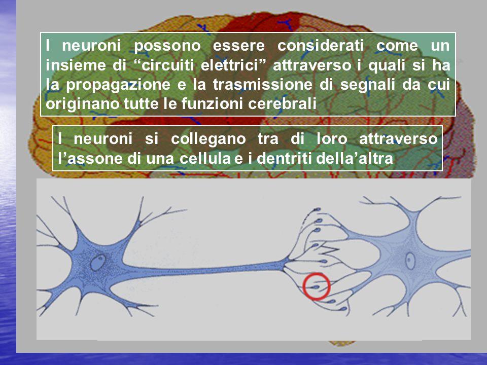 I neuroni si collegano tra di loro attraverso l'assone di una cellula e i dentriti della'altra I neuroni possono essere considerati come un insieme di