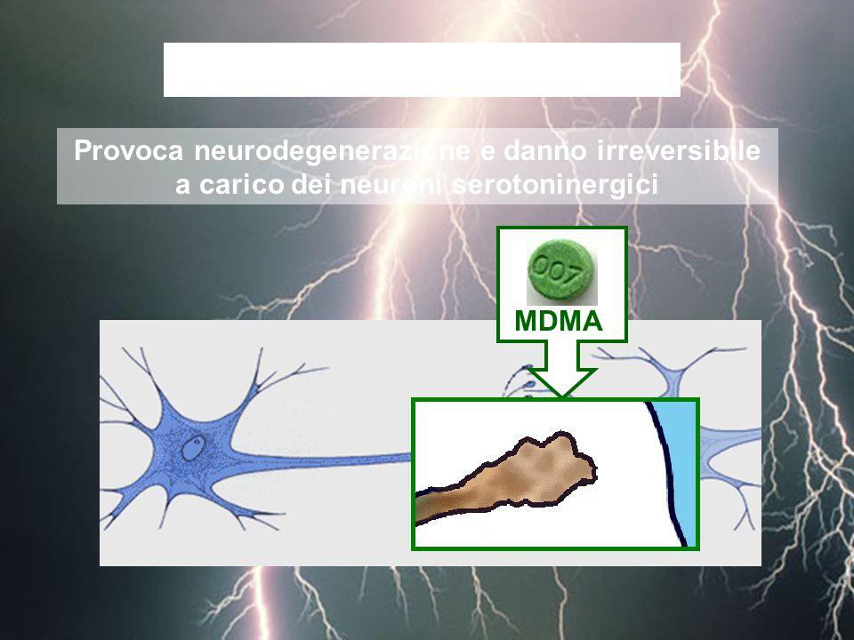 Provoca neurodegenerazione e danno irreversibile a carico dei neuroni serotoninergici L'MDMA è NEUROTOSSICA MDMA