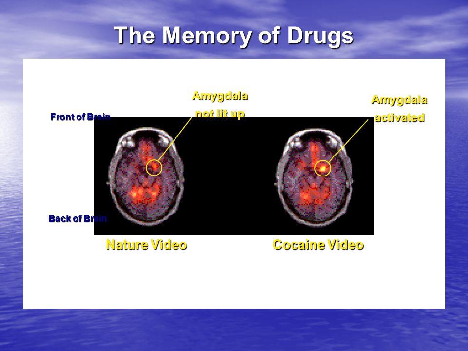 Chi fa uso di ecstasy, anche in modo occasionale, magari solo il fine settimana in discoteca mette a repentaglio le sue capacità cognitive, anche a distanza di parecchio tempo.