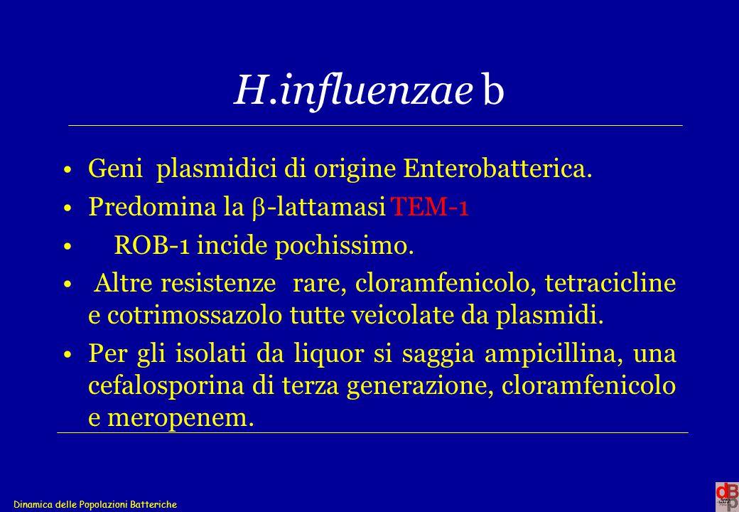 Dinamica delle Popolazioni Batteriche H.influenzae b Geni plasmidici di origine Enterobatterica. Predomina la  -lattamasi TEM-1 ROB-1 incide pochissi