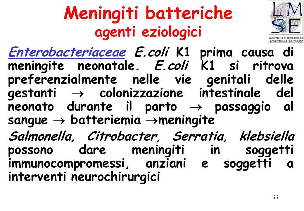 66 Meningiti batteriche agenti eziologici Enterobacteriaceae E.coli K1 prima causa di meningite neonatale. E.coli K1 si ritrova preferenzialmente nell