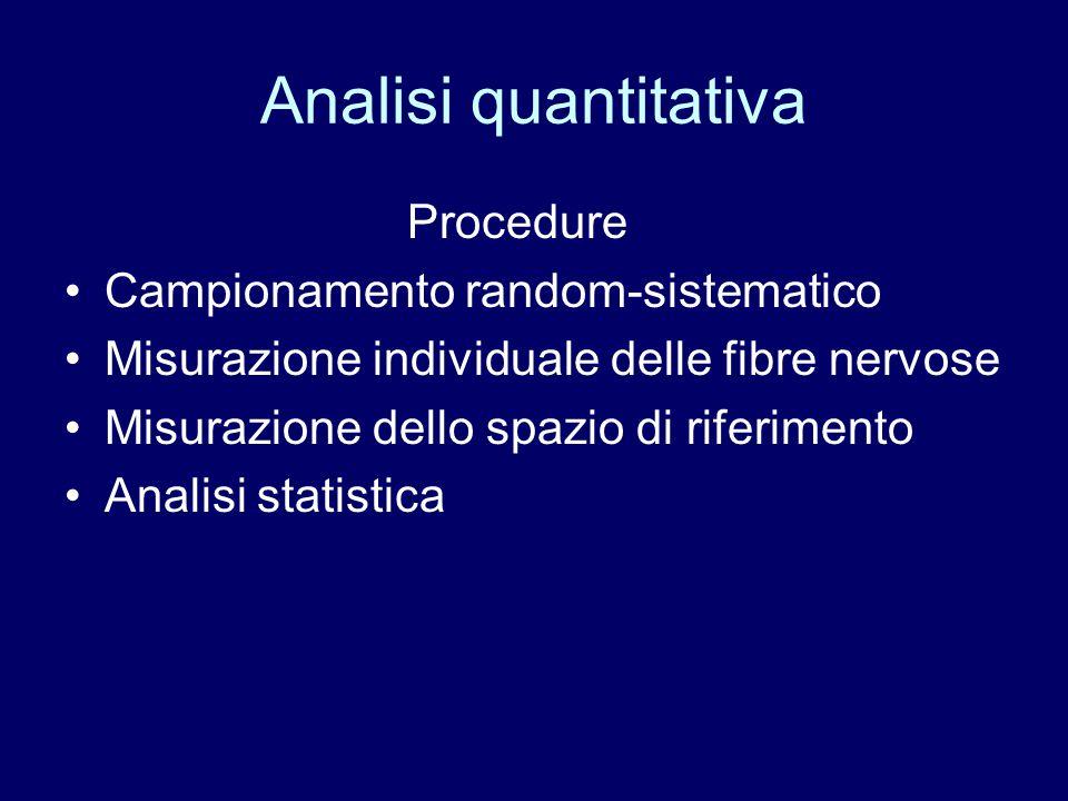 Analisi quantitativa Procedure Campionamento random-sistematico Misurazione individuale delle fibre nervose Misurazione dello spazio di riferimento An