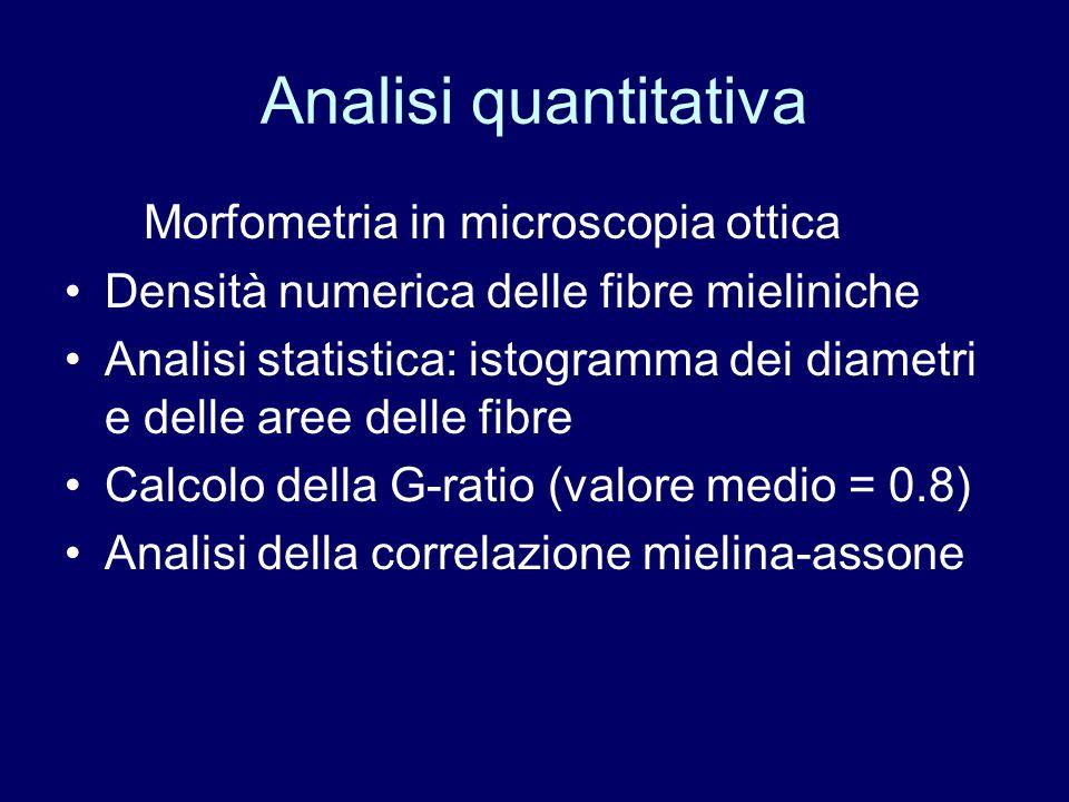 Analisi quantitativa Morfometria in microscopia ottica Densità numerica delle fibre mieliniche Analisi statistica: istogramma dei diametri e delle are