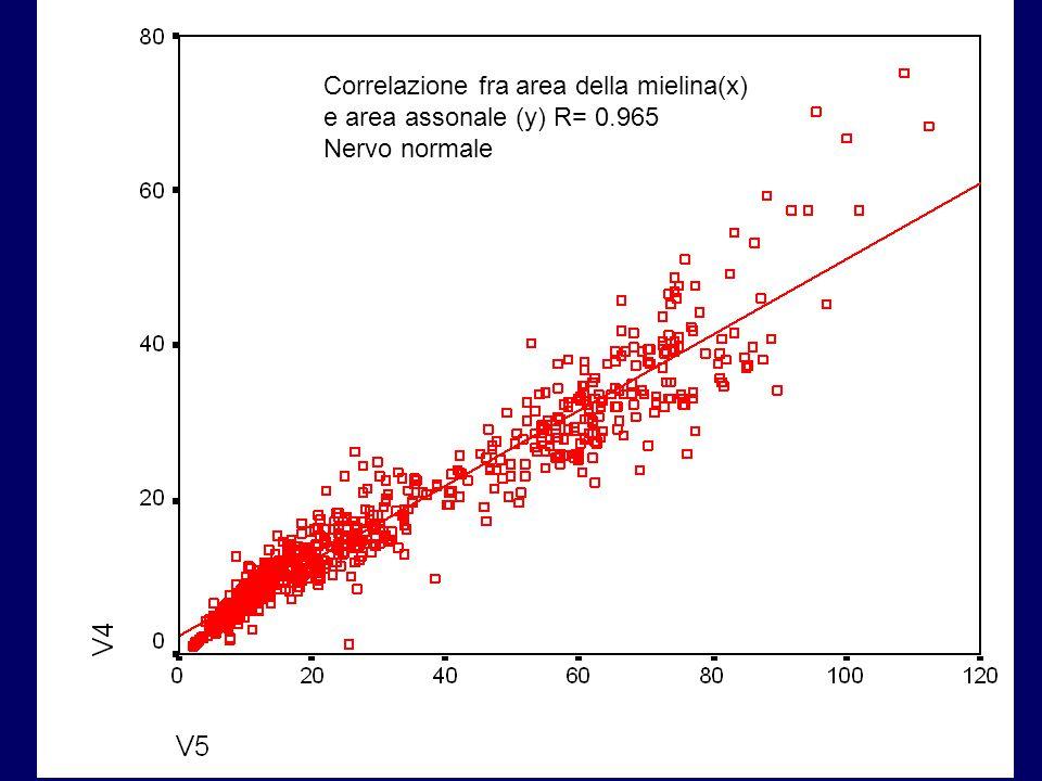 Correlazione fra area della mielina(x) e area assonale (y) R= 0.965 Nervo normale