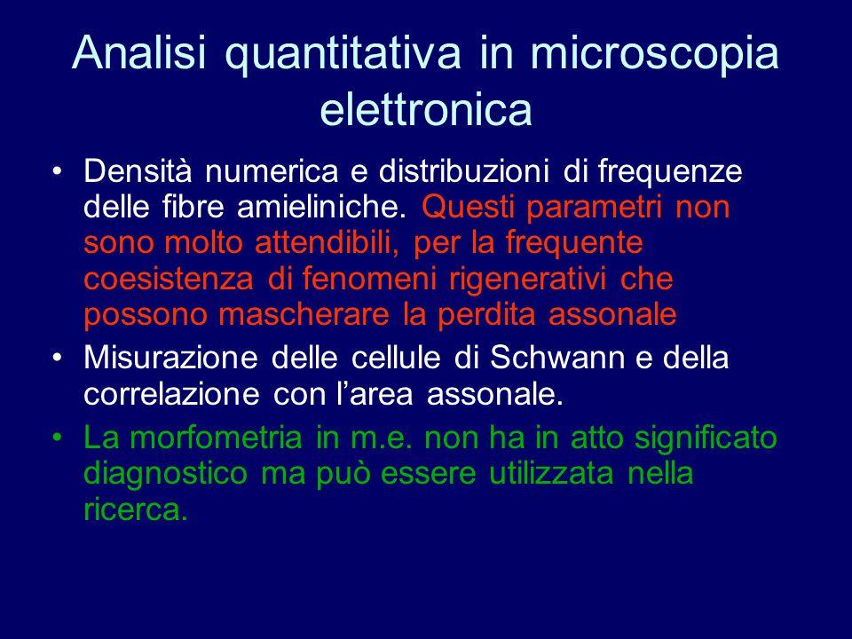 Analisi quantitativa in microscopia elettronica Densità numerica e distribuzioni di frequenze delle fibre amieliniche. Questi parametri non sono molto