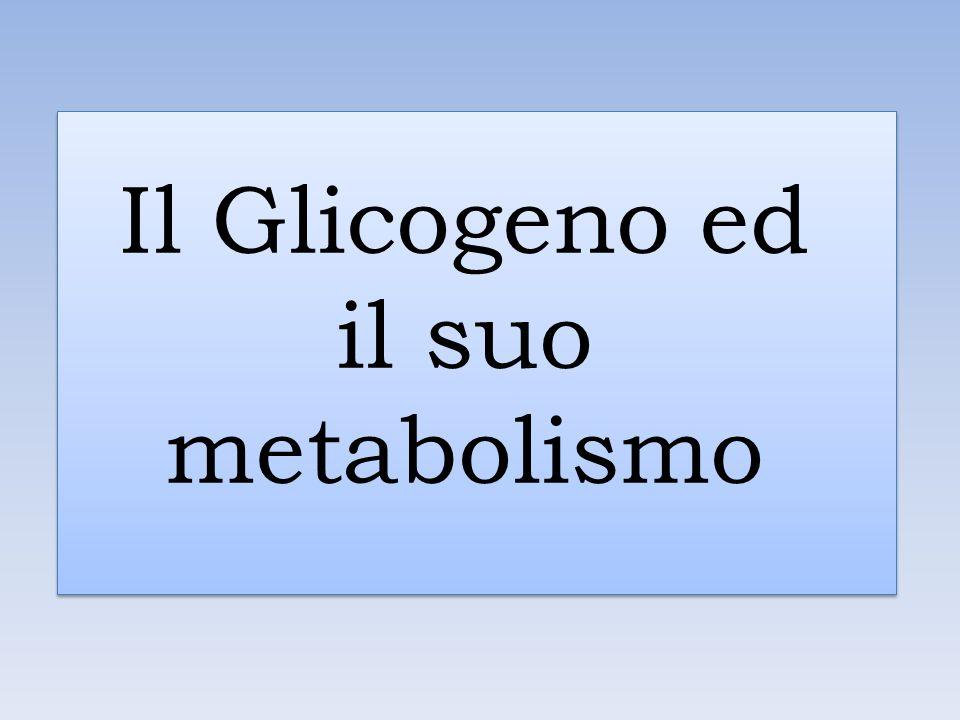 Il Glicogeno ed il suo metabolismo