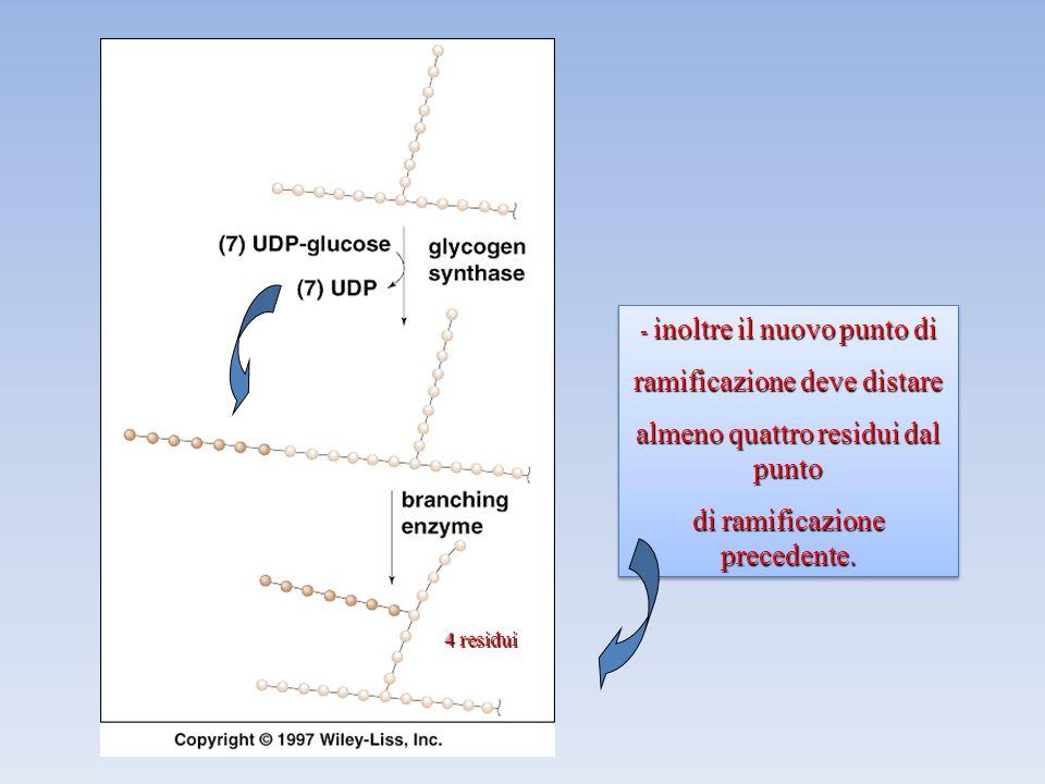 4 residui - inoltre il nuovo punto di ramificazione deve distare almeno quattro residui dal punto di ramificazione precedente.