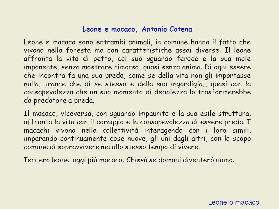 Leone o macaco Leone e macaco, Antonio Catena Leone e macaco sono entrambi animali, in comune hanno il fatto che vivono nella foresta ma con caratteristiche assai diverse.