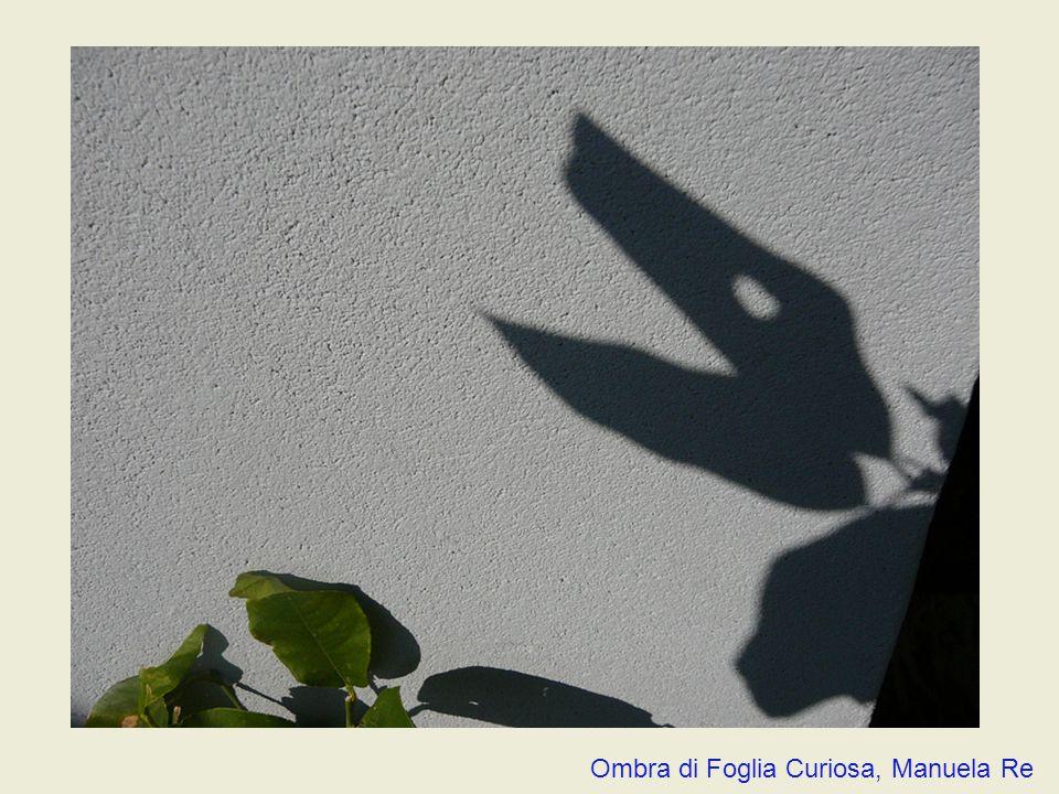 Ombra di Foglia Curiosa, Manuela Re