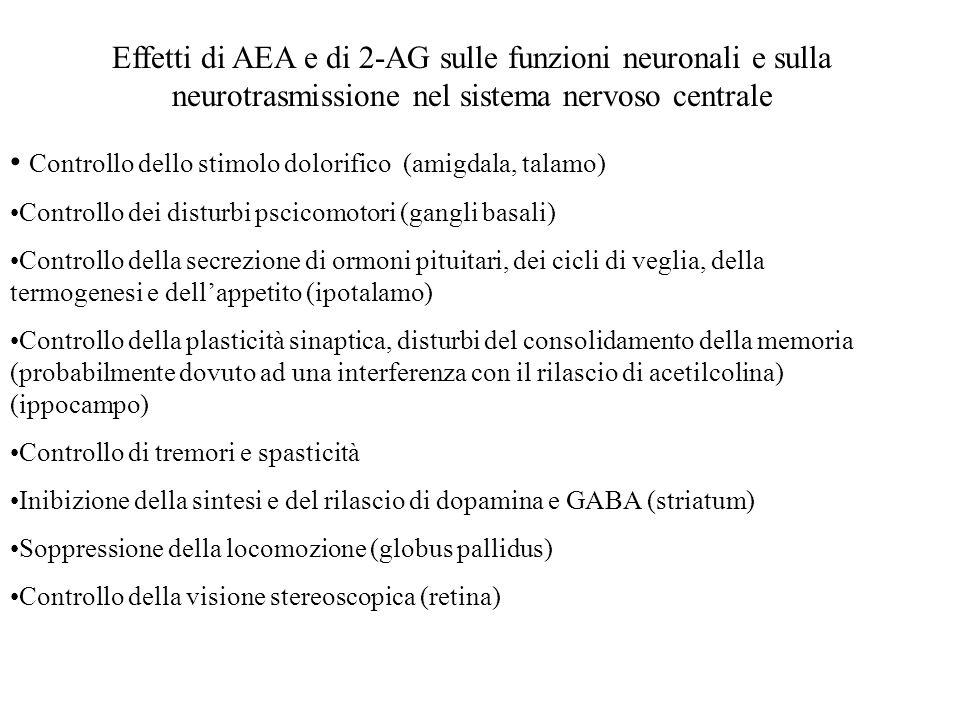 Effetti di AEA e di 2-AG sulle funzioni neuronali e sulla neurotrasmissione nel sistema nervoso centrale Controllo dello stimolo dolorifico (amigdala,