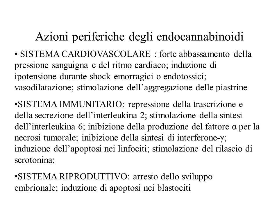 Azioni periferiche degli endocannabinoidi SISTEMA CARDIOVASCOLARE : forte abbassamento della pressione sanguigna e del ritmo cardiaco; induzione di ip