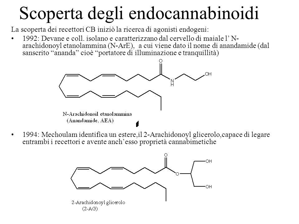 Scoperta degli endocannabinoidi La scoperta dei recettori CB iniziò la ricerca di agonisti endogeni: 1992: Devane e coll. isolano e caratterizzano dal
