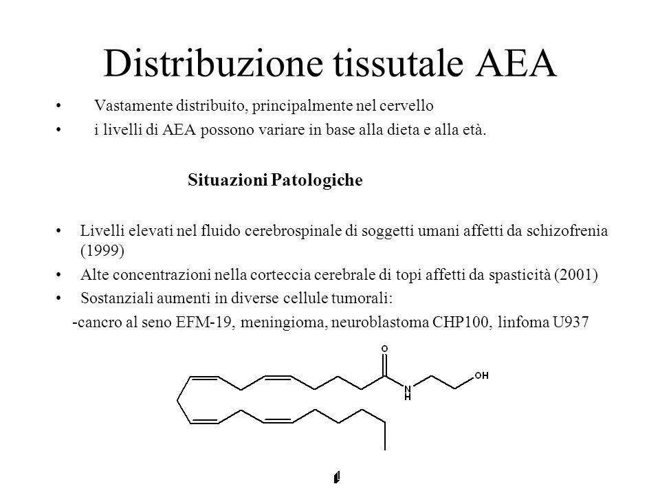 Distribuzione tissutale AEA Vastamente distribuito, principalmente nel cervello i livelli di AEA possono variare in base alla dieta e alla età. Situaz