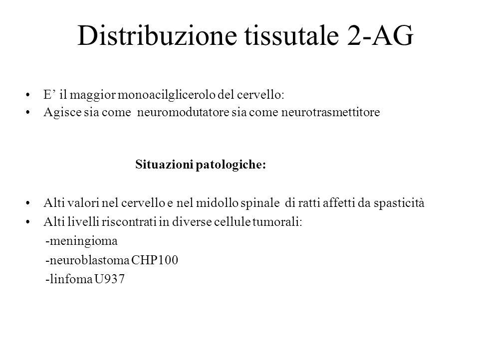 Distribuzione tissutale 2-AG E' il maggior monoacilglicerolo del cervello: Agisce sia come neuromodutatore sia come neurotrasmettitore Situazioni pato
