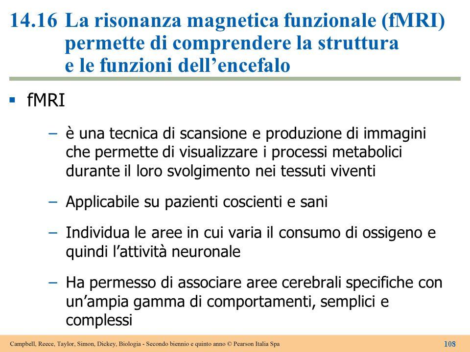 14.16La risonanza magnetica funzionale (fMRI) permette di comprendere la struttura e le funzioni dell'encefalo  fMRI –è una tecnica di scansione e pr
