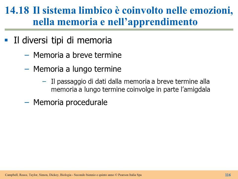 14.18Il sistema limbico è coinvolto nelle emozioni, nella memoria e nell'apprendimento  Il diversi tipi di memoria –Memoria a breve termine –Memoria