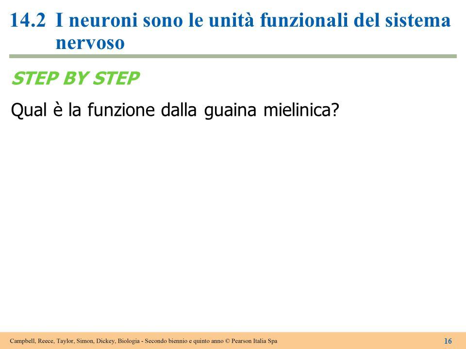 14.2I neuroni sono le unità funzionali del sistema nervoso STEP BY STEP Qual è la funzione dalla guaina mielinica? 16