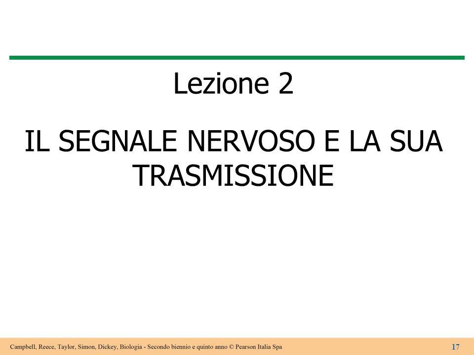 Lezione 2 IL SEGNALE NERVOSO E LA SUA TRASMISSIONE 17