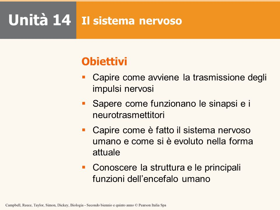 Unità 14 Il sistema nervoso Obiettivi  Capire come avviene la trasmissione degli impulsi nervosi  Sapere come funzionano le sinapsi e i neurotrasmet