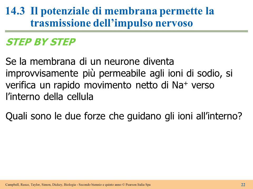 14.3Il potenziale di membrana permette la trasmissione dell'impulso nervoso STEP BY STEP Se la membrana di un neurone diventa improvvisamente più perm