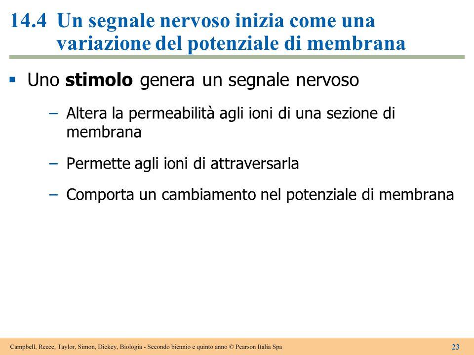14.4Un segnale nervoso inizia come una variazione del potenziale di membrana  Uno stimolo genera un segnale nervoso –Altera la permeabilità agli ioni