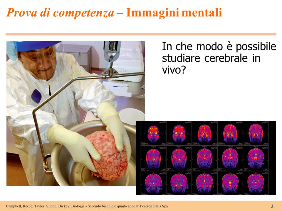 3 Prova di competenza – Immagini mentali In che modo è possibile studiare cerebrale in vivo?