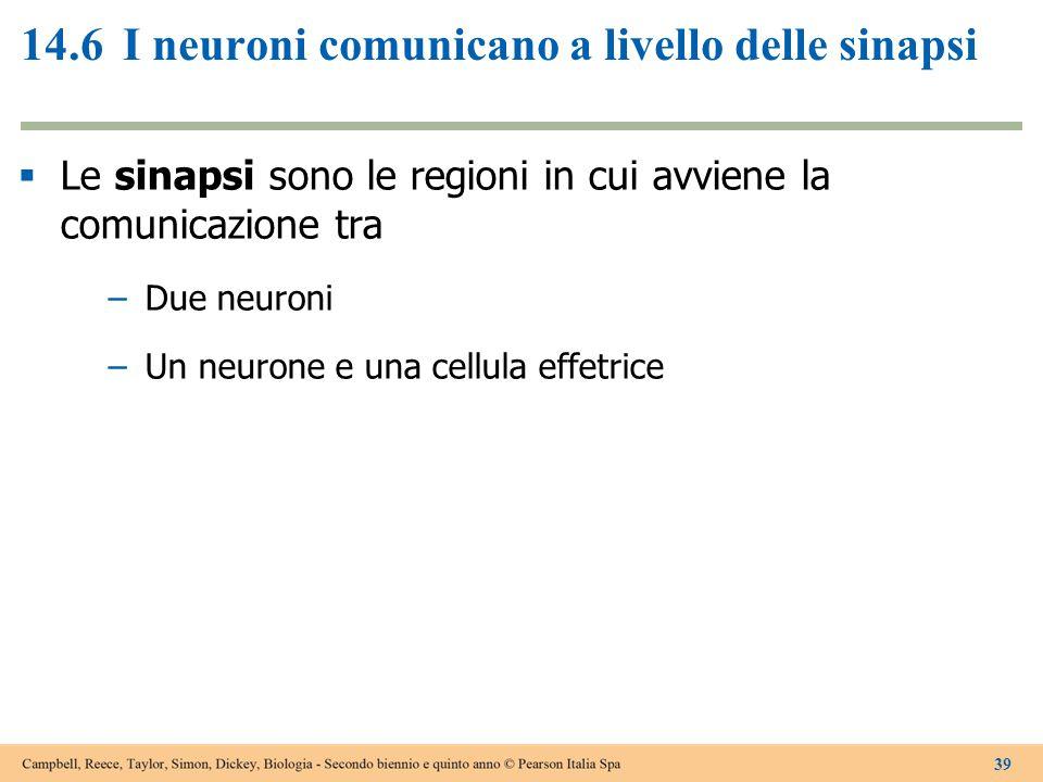 14.6I neuroni comunicano a livello delle sinapsi  Le sinapsi sono le regioni in cui avviene la comunicazione tra –Due neuroni –Un neurone e una cellu