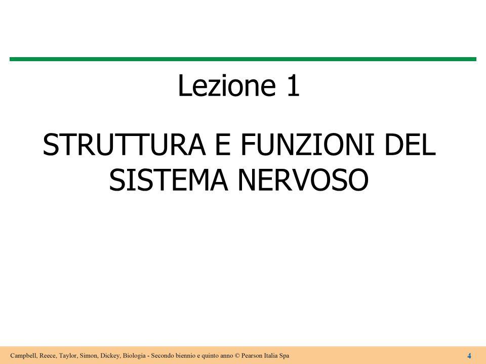 Lezione 1 STRUTTURA E FUNZIONI DEL SISTEMA NERVOSO 4
