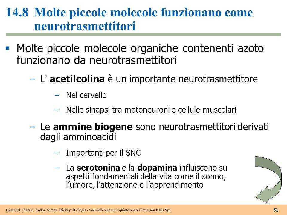 14.8Molte piccole molecole funzionano come neurotrasmettitori  Molte piccole molecole organiche contenenti azoto funzionano da neurotrasmettitori –L'