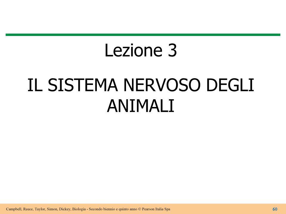 Lezione 3 IL SISTEMA NERVOSO DEGLI ANIMALI 60