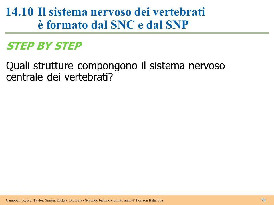 14.10Il sistema nervoso dei vertebrati è formato dal SNC e dal SNP STEP BY STEP Quali strutture compongono il sistema nervoso centrale dei vertebrati?